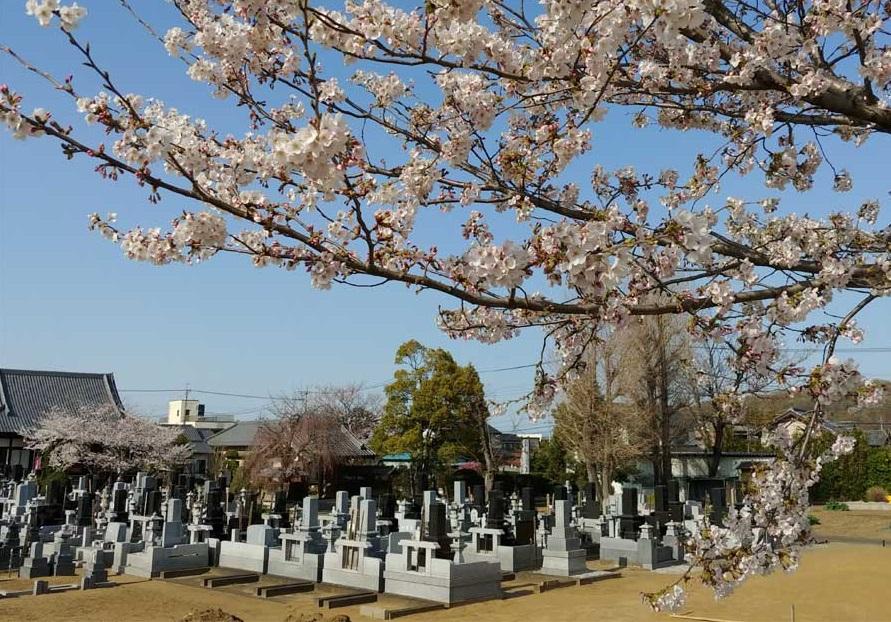 本庄市墓地|成就院