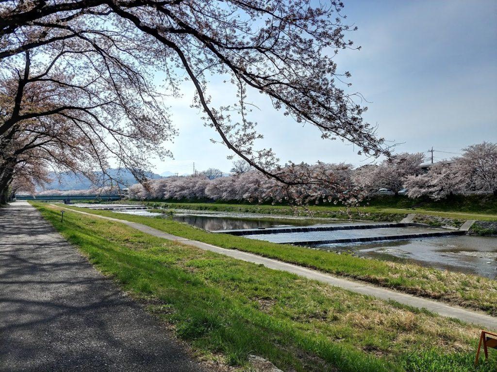 埼玉県児玉町 こだま千本桜